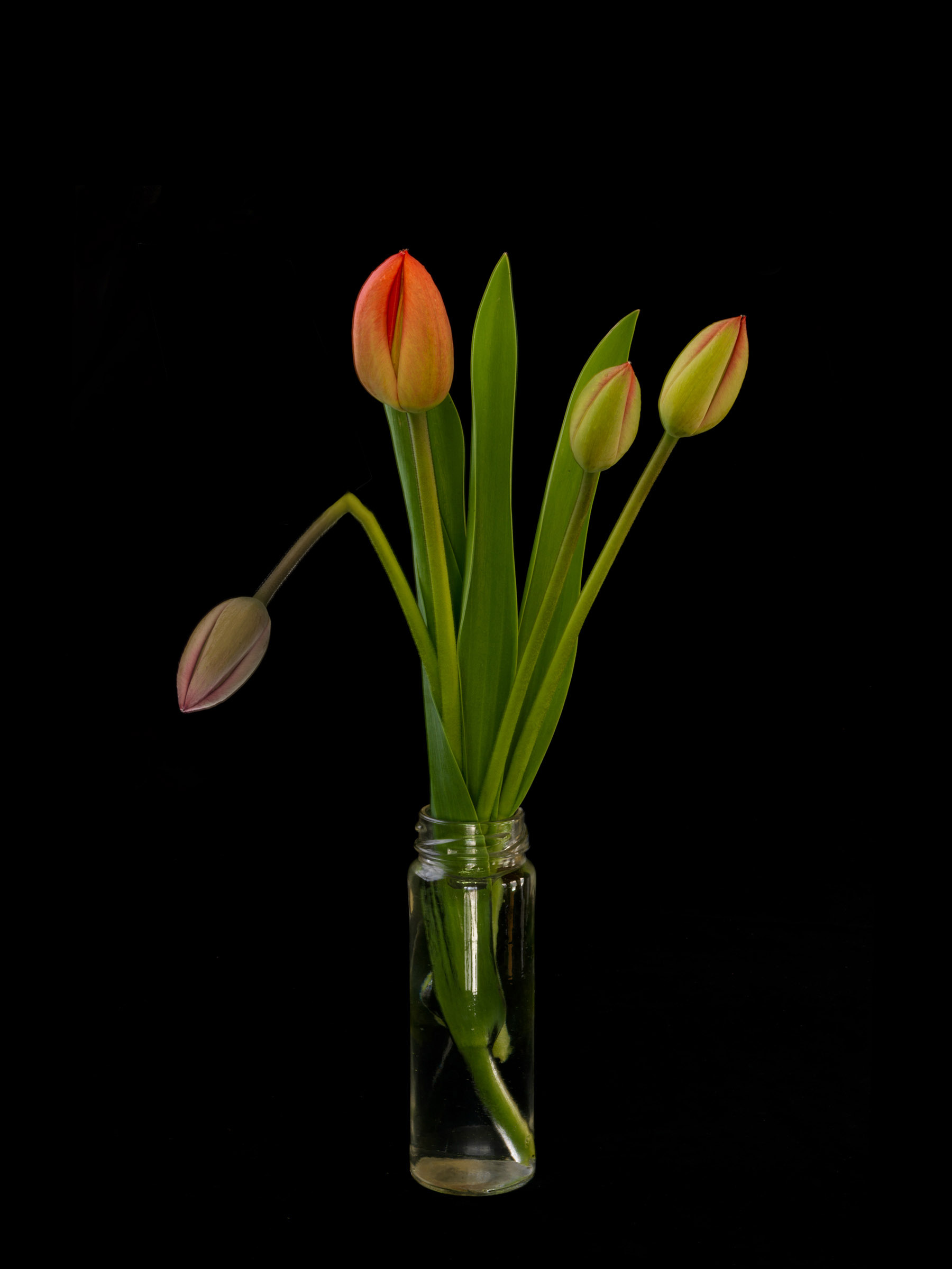 Tulips One Dead Arrangement, Wick Beavers Still Life Photographer NYC